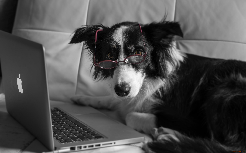 картинки компьютер и животные солнечного лета
